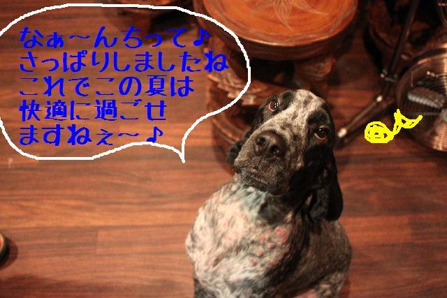 b0130018_059685.jpg