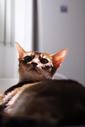 [猫的]ゴッドファーザー_e0090124_0465417.jpg
