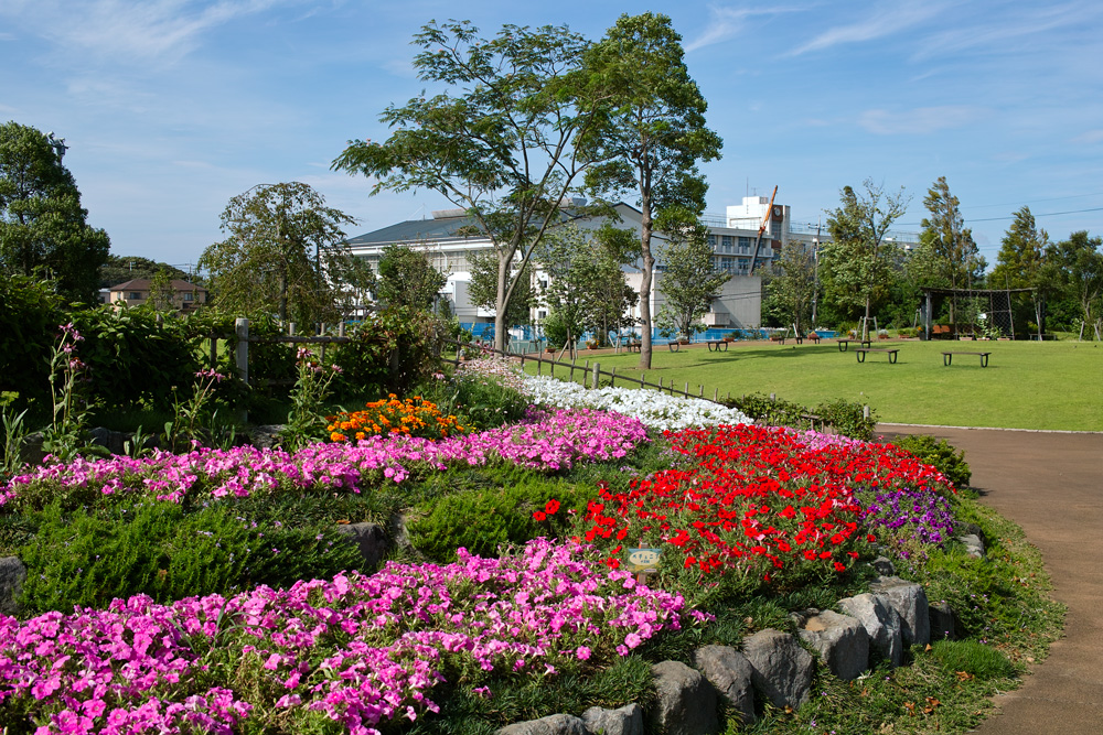 夏のゆいの花公園 7月16日の花壇から_c0223825_7242028.jpg