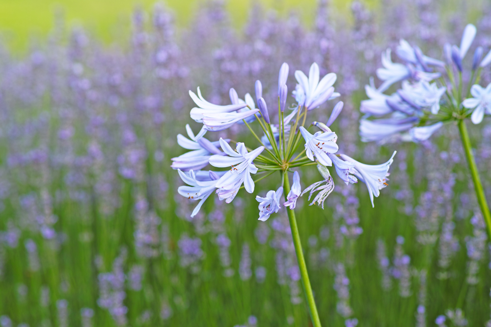 夏のゆいの花公園 7月16日の花壇から_c0223825_751114.jpg