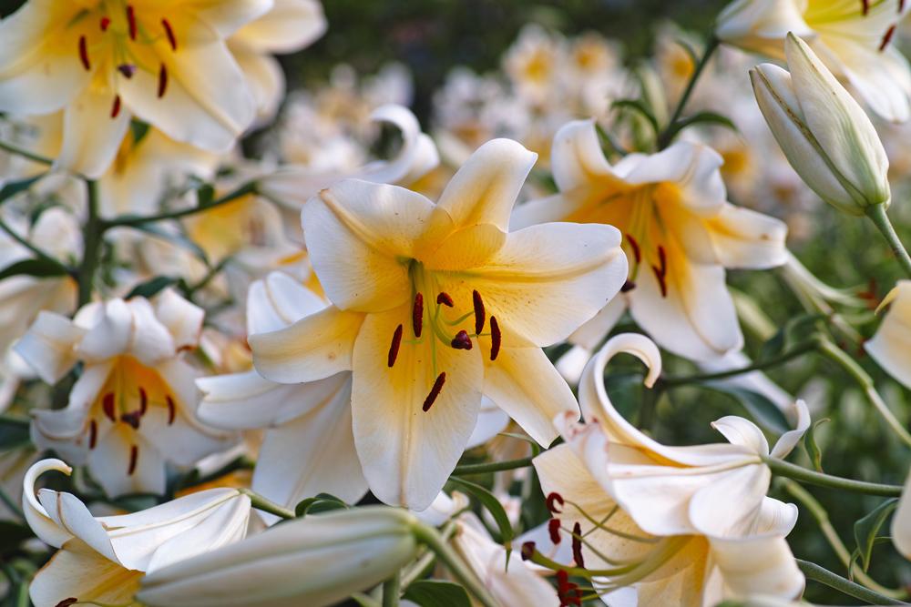 夏のゆいの花公園 7月16日の花壇から_c0223825_753403.jpg