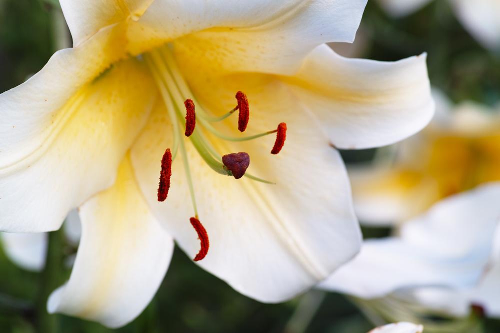 夏のゆいの花公園 7月16日の花壇から_c0223825_75589.jpg