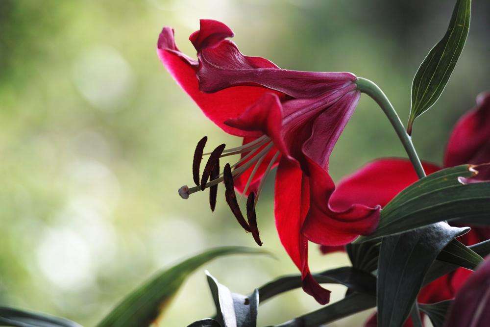 夏のゆいの花公園 7月16日の花壇から_c0223825_805195.jpg