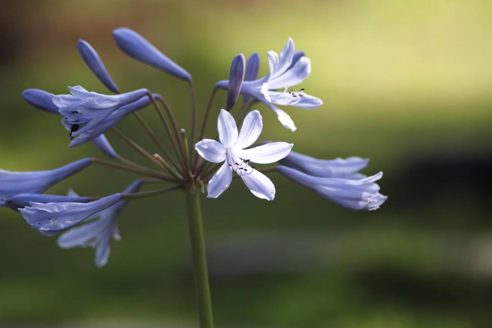 夏のゆいの花公園 7月16日の花壇から_c0223825_833011.jpg