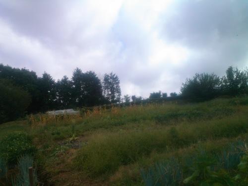 スイカをカラスに食べれれた....夏の草取り!_b0137932_127252.jpg