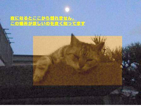 e0255638_13565263.jpg