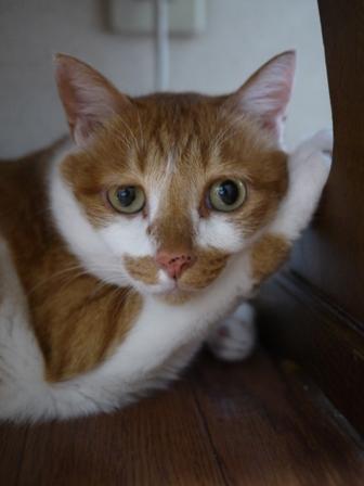 猫のお友だち ちゃーくんちょびくんペコちゃん編。_a0143140_221082.jpg