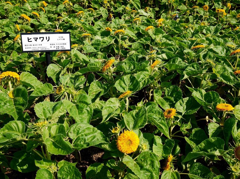 和歌山県植物公園緑花センター _b0093754_20461319.jpg