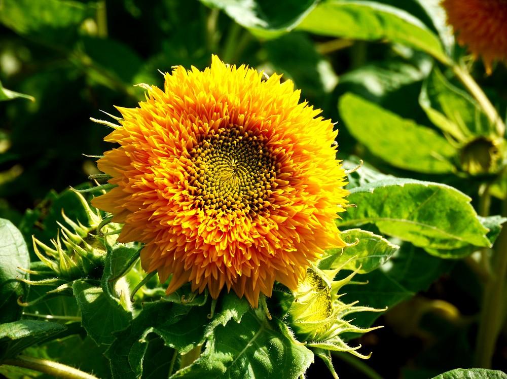 和歌山県植物公園緑花センター _b0093754_2046407.jpg