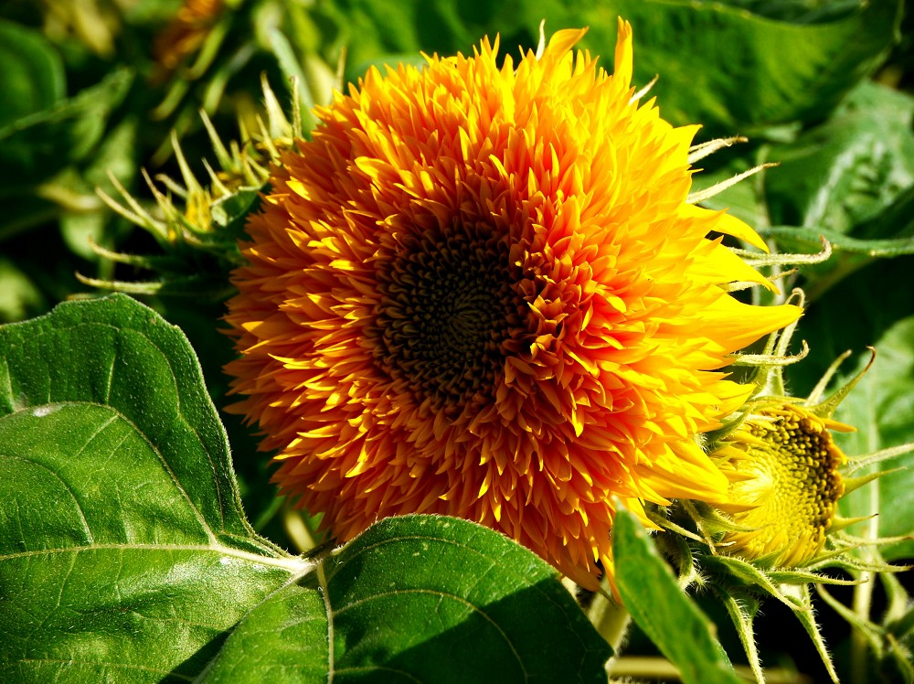和歌山県植物公園緑花センター _b0093754_2047260.jpg
