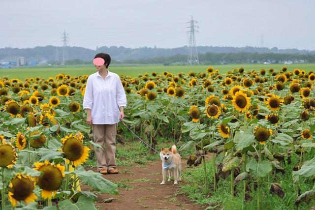 ひまわり畑で_a0126590_0275676.jpg