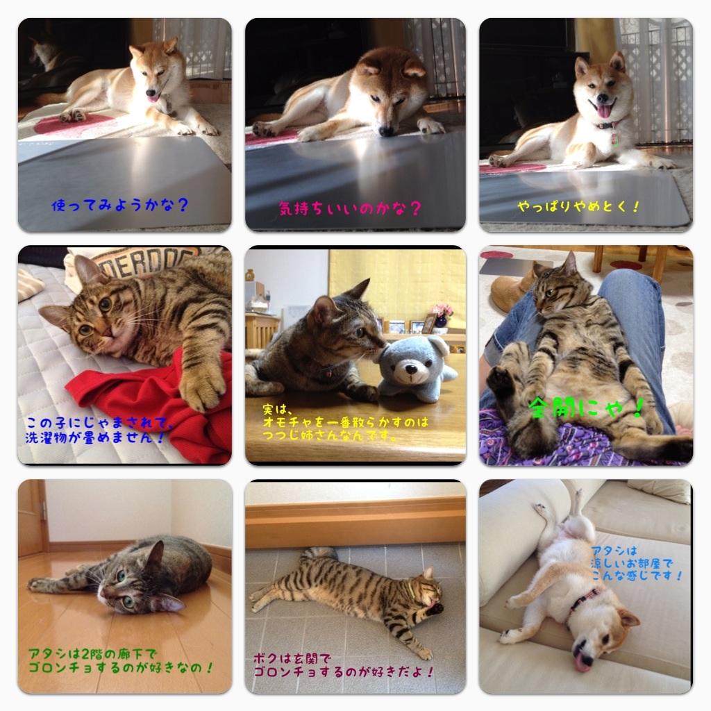 かぼちゃんランド_a0126590_23345637.jpg