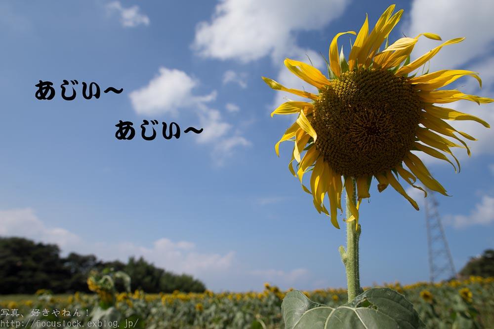 f0220502_17595483.jpg