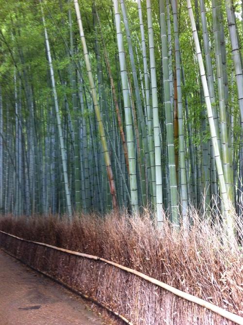 京都_a0059209_16572723.jpg