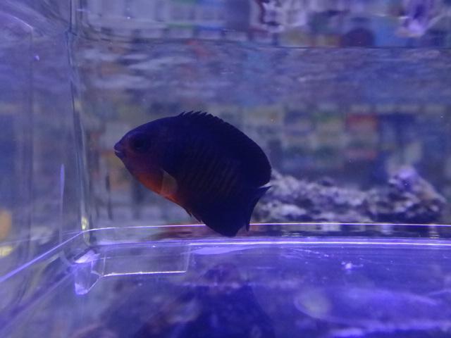 120801 海水魚・水草・淡水魚・金魚_f0189122_12584577.jpg