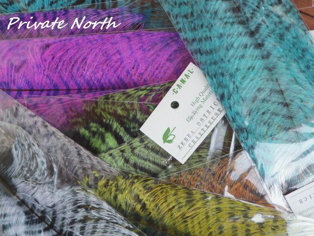 Zebra Ostrich & Seals Fur_d0261148_1765810.jpg