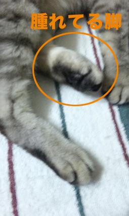 トラッキー足を怪我する_a0045697_19422880.jpg