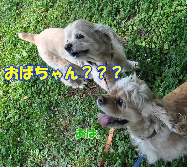 b0067012_20105725.jpg