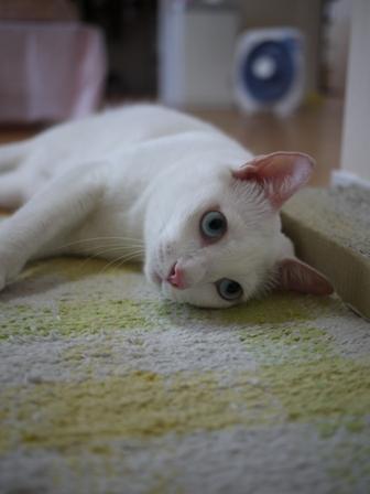 猫のお友だち vieくん編。_a0143140_2355221.jpg