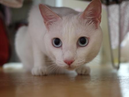 猫のお友だち vieくん編。_a0143140_236583.jpg