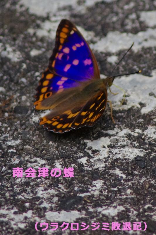 b0144049_19412292.jpg