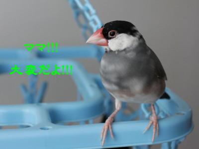 b0158061_2020411.jpg