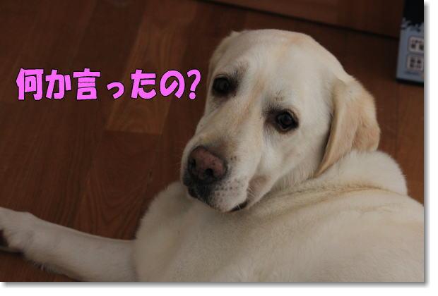 b0136683_1018149.jpg