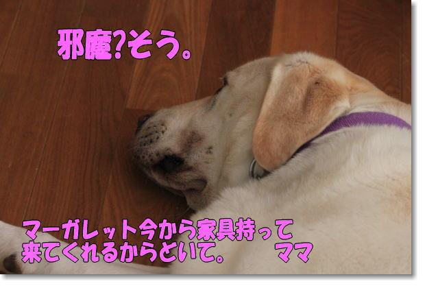 b0136683_1019237.jpg