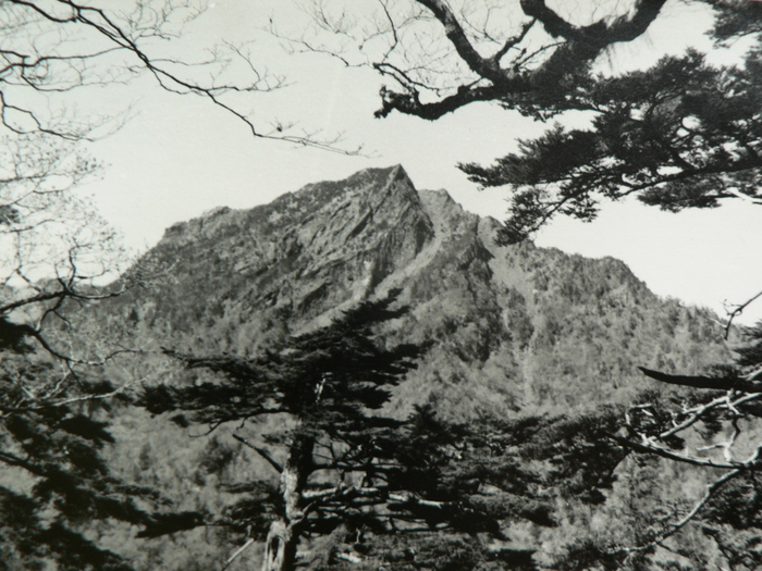 石鎚山の花_f0219710_12194092.jpg