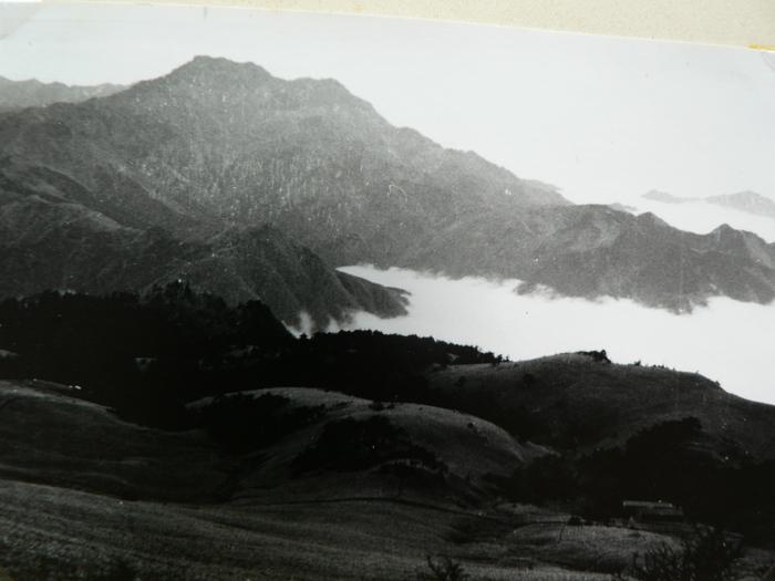 石鎚山の花_f0219710_12282311.jpg