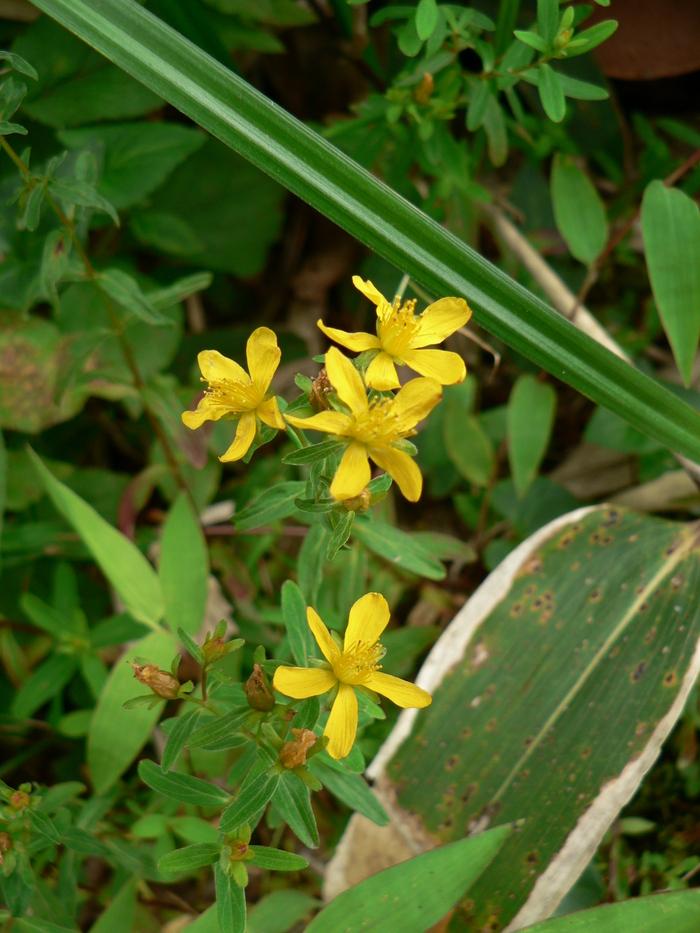 石鎚山の花_f0219710_7585826.jpg