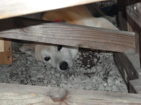 鶴富姫の墓と看板犬(^^)_b0228113_9421755.jpg