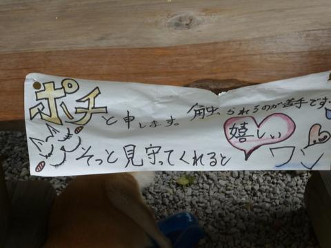 鶴富姫の墓と看板犬(^^)_b0228113_9434625.jpg