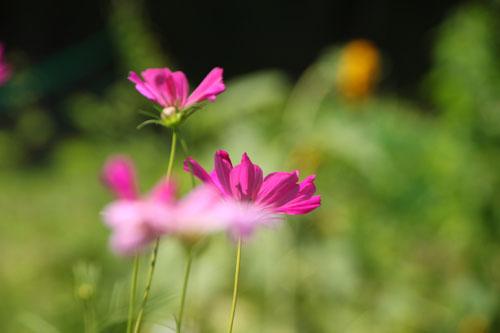菜園 夏の盛り_e0048413_21422434.jpg