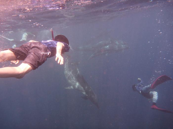 イルカの棲む島 御蔵島より_e0015223_1140253.jpg