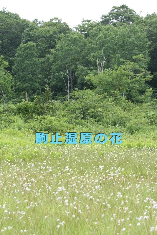 b0144049_11423727.jpg
