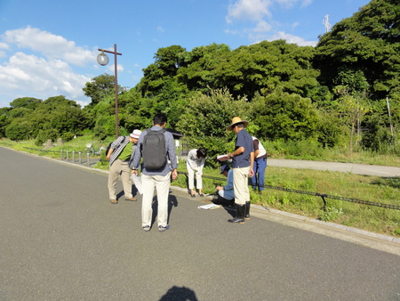カニの道作り現場検証 in せんなん里海公園_c0108460_1352991.jpg