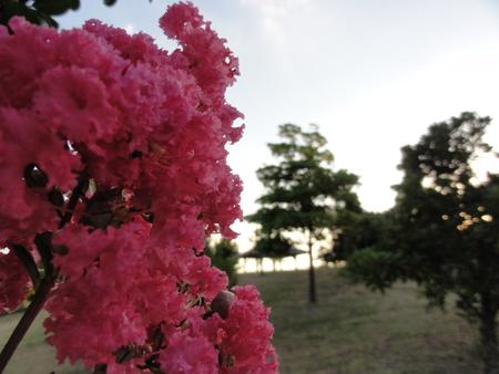 せんなん里海公園陸ガニ生態調査サポート_c0108460_2295350.jpg