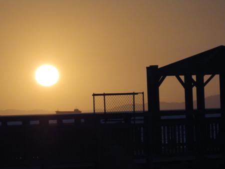 せんなん里海公園陸ガニ生態調査サポート_c0108460_2344976.jpg
