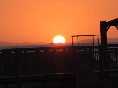せんなん里海公園陸ガニ生態調査サポート_c0108460_2363130.jpg