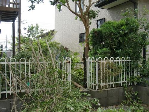 駐車場 ~  植木伐採と解体_d0165368_16282842.jpg