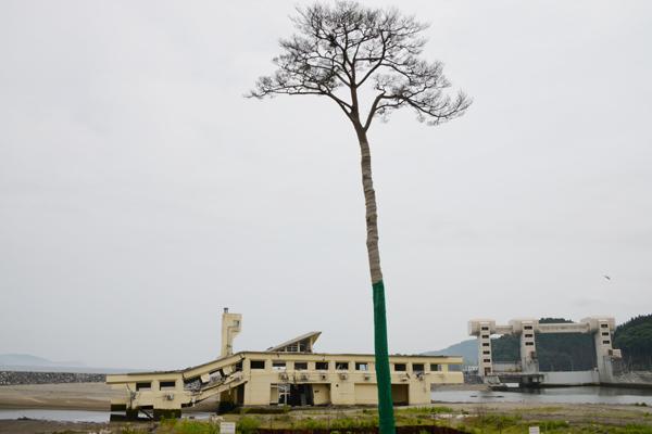 畑が仮設住宅の被災者を救う_e0171573_146022.jpg