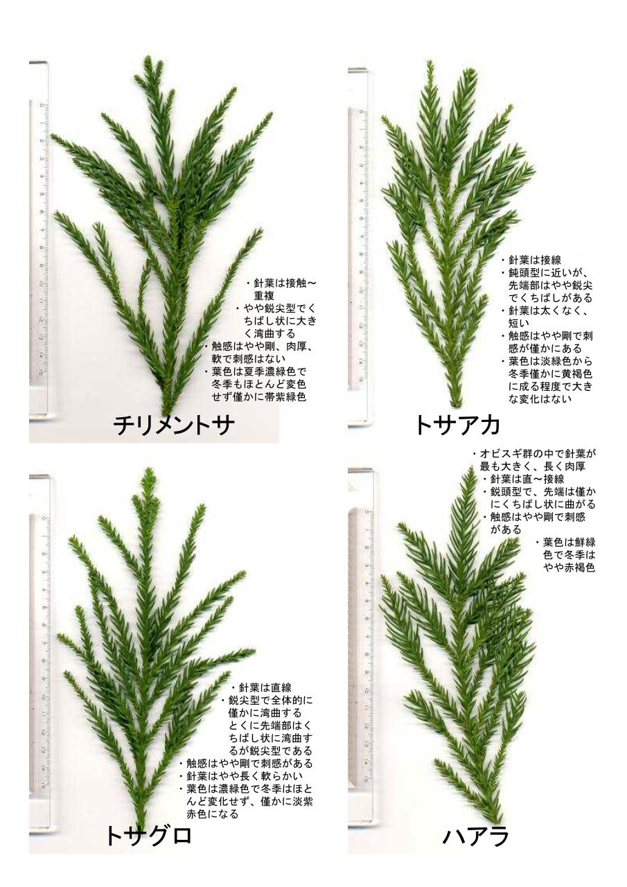 杉に、会いに行こう ♪_f0138874_16244752.jpg
