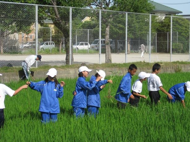 暑い一日、草刈マンデー_a0213879_16281286.jpg