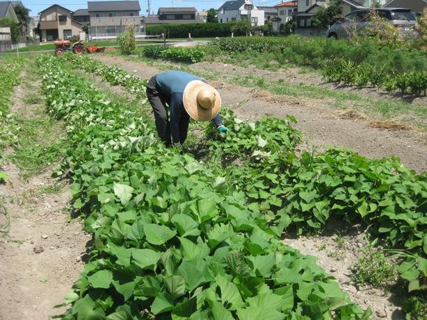暑い一日、草刈マンデー_a0213879_1628263.jpg