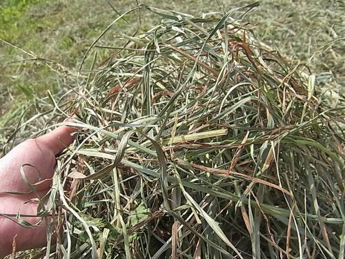 今日は乾草とり_f0236291_1257577.jpg
