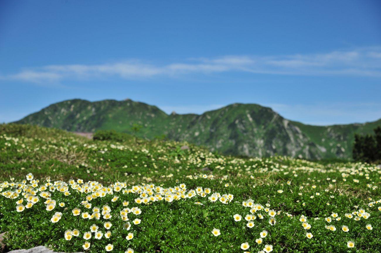 天空の花々_c0220824_19253852.jpg