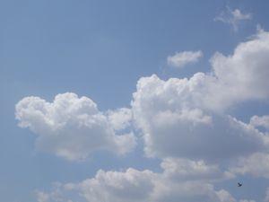 大出雲展_e0153039_15253310.jpg