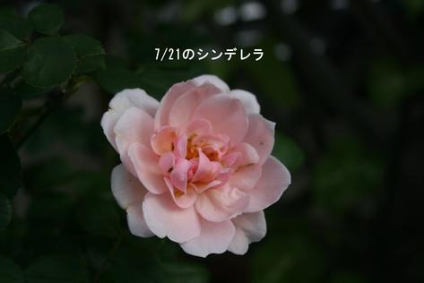 f0100046_1828327.jpg