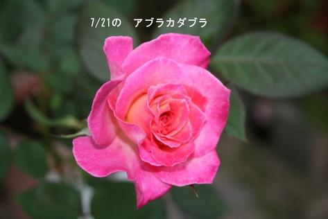 f0100046_18294381.jpg